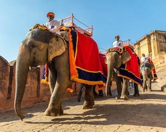 India Photography, Rajasthan Elephants, Wall Art, Large Print, India Art Print, Rich Colors