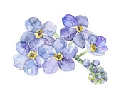 Forget Me Not Painting - ...