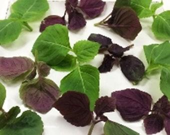 FRESH ORGANIC SHISO Greens Mix Edible Decorative Sushi Dessert Mint large  8 ounce tub