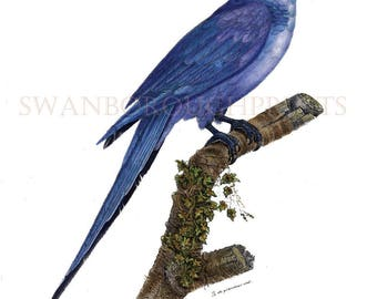 Blue Parrot Print. Blue Hyacinth Macaw Amazon Blue Parrot. Blue Macaw Parrot Print. Amazon Blue Parrot Watercolored Nature Study Art Print