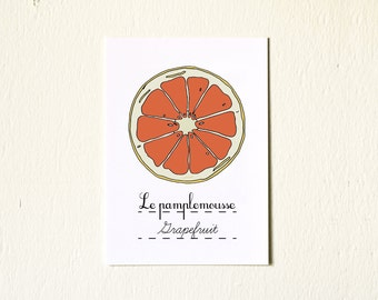 Kitchen Art illustration Red Grapefruit Winter Fruit - 5x7 Reproduction Art Print -French Retro Kitchen orange red Home Decor Nature Citrus