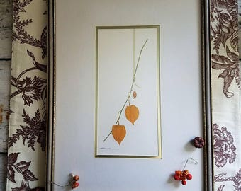 Chinese Lantern Print / R Mueller Art / Nature Art / Art / Framed Art