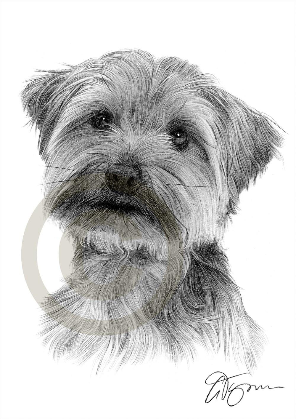 Crayon de chien yorkshire terrier toy dessin imprimer oeuvre - Dessin d un chien ...