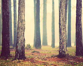 Woods - Fairytale Photography - Forest Photos - Muted, Soft, Zen - Nature Photographs - Landscape