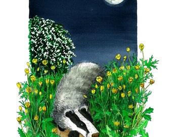 Moonlight Bear - badger in May
