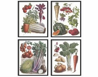 Botanical Vegetable Print Set of 4 -  Botanical Illustration - Kitchen Wall Art - Kitchen Print Set - Vintage Prints Art - Vintage Prints