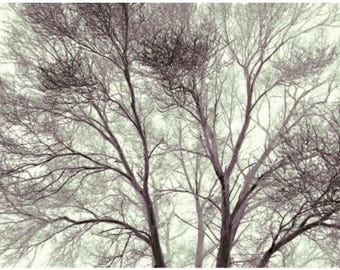 Trees in the Park Photo Print