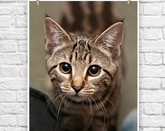Whimsical Whiskers - baby animal photograph cat and kitten fine art portrait wall poster print photography home decor nursery decor