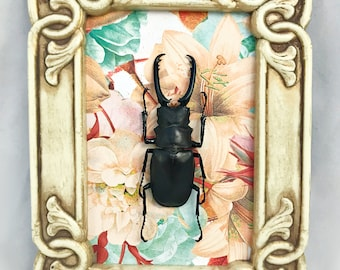Art Nouveau Floral Stag Beetle