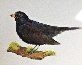 "Blackbird 12"" x 10"" Original watercolour painting"