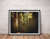 redwood photography / nat...