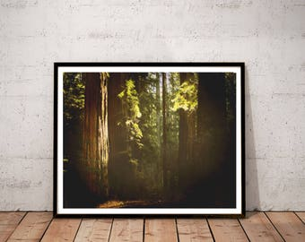 """redwood photography / nature forest tree art print / green brown large wall art / 11x14 20x24 photo art print / """"sunlit redwood forest"""