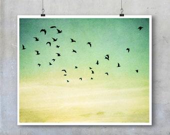 Bird Photography - birds in flight silhouetted evening sky - 11x14 16x20 20x30 photo big print poster wall art home decor nature flock