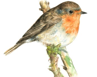 Robin watercolor painting - bird watercolor painting - 5x7 inch print - 0058