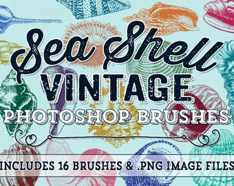 Sea Shell Photoshop Brushes - Vintage Beach Sea Shells Digital Stamps - Beach Shell Clipart Elements