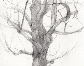 Original drawing, pencil drawing, tree portrait