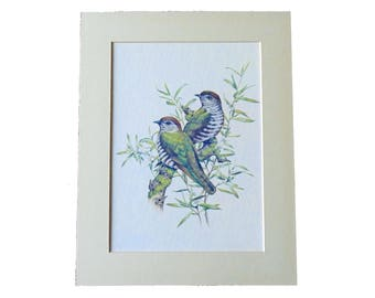 Bird and Botanical Illustrations (3 different prints/styles)