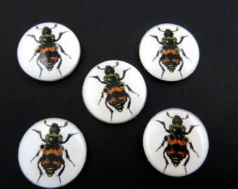 """5 Black and Orange Insect Buttons.  3/4"""" or 20 mm round."""