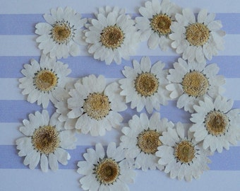 Daisies, Flower Sprinkles™, Dried Flowers, Pressed Flowers, Biodegradable Petals, Country Wedding, pressed Daisies, Wedding Flowers