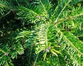 4lbs Balsam Fir Needles Bulk Dried Loose USA Grown Wild Harvested Traditional Christmas Tree Fragrance Potpourri Sachet Vermont Maine Pillow