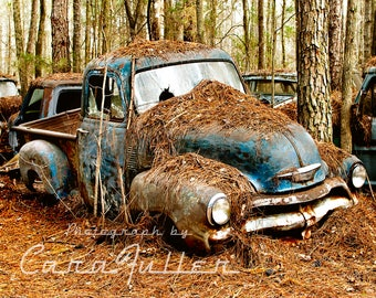 1954 Blue Chevy Truck in Trees Photograph