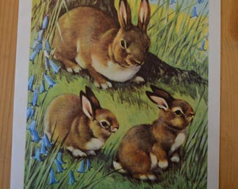 1950s Vintage Rabbit Illustration - Farmyard Friends