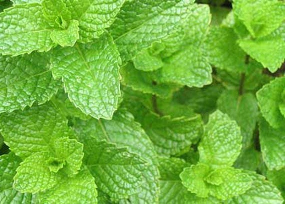how to make spearmint tea with dried leaves