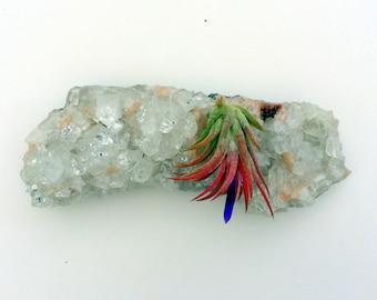 Air Plant Crystal Garden Apophyllite Cluster Crystal Planter