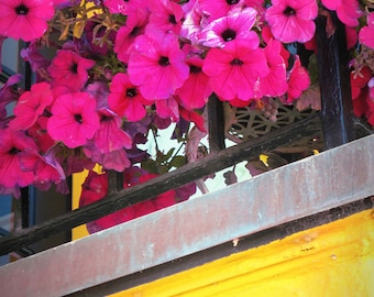 Hot Pink Petunias on a Sunny Balcony - Flowers in the Sun - Capitola by the Sea - Original Color Photograph by Suzanne MacCrone Rogers
