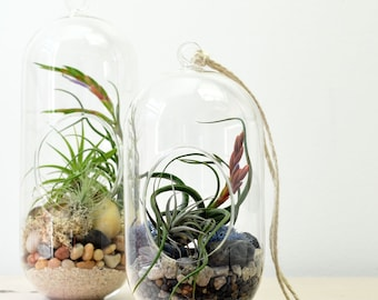 Air Plant Terrarium// Hanging Terrarium// Tall Glass Orb// Living Home Decor// Green Gift