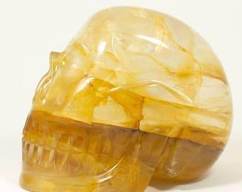 Extra Large Golden Healer Skull   -   3.3 kilograms Golden Healer Skull - Carved in Brazil