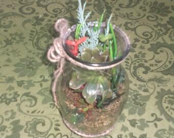 living succulent terrarium