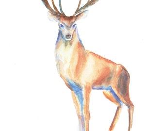 "Original Watercolor Fine Art ""Deer"" Original & Hand Made Art, One of A Kind Piece, Wall Decor, Home decor,size : 13,7*9,8 Inch"