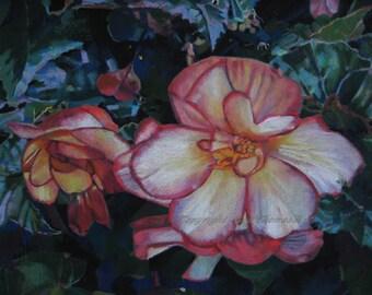 Butchart's Pin-up Begonia