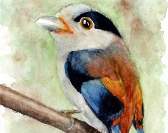 Colourful Bird - watercolour fine art print