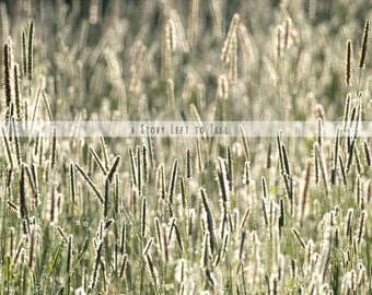 Summer Grass Digital Background, Grass Field Background, Nature Backdrop, Instant Download, Green Grass, Country Background
