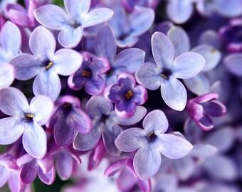 Lilacs photo, spring wall art, purple flower photo, springtime print, photo, floral art, flower photography, botanical art, bedroom wall art