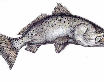 """8"""" Speckled Seatrout Decal"""