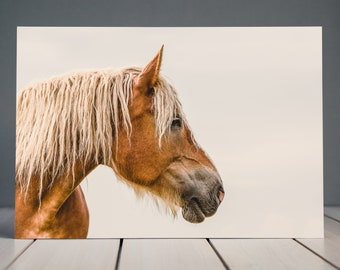 Heavy Horse Print | Horse Photography | Equine Fine Art Horse Print | Horse Wall Art | Horse Home Decor
