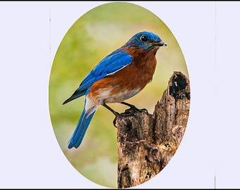 sm Suncatcher -Blue Bird
