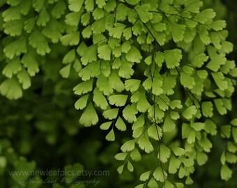 Maidenhair Fern Botanical Print, Fern Print, Fern Photography, Green and Black Wall Art, Nature Decor, Large Leaf Art, Nature Color Palette