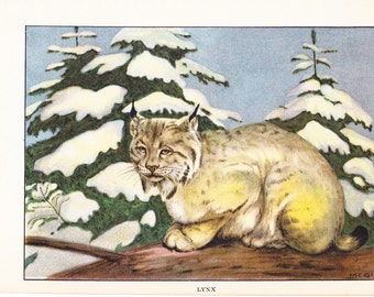 1926 Animal Print - Lynx - Vintage Antique Natural History Home Decor Art Illustration for Framing