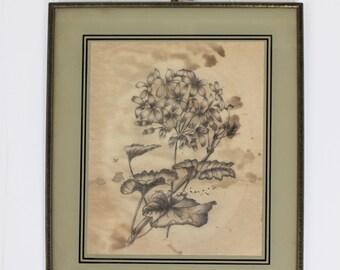 Antique encadré Graphite dessin de fleurs