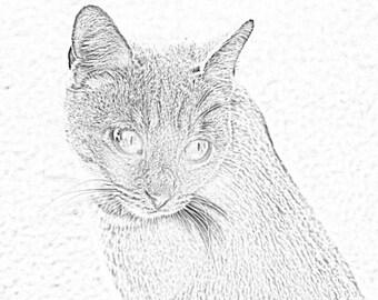 Line Art Cats