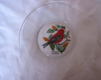Clear Plate Scarlet Tanager