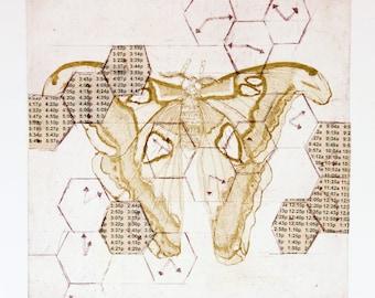 Atlas- Original, hand-pulled etching