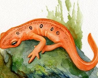 Salamander print, Orange Gecko, giclee print of watercolor illustration