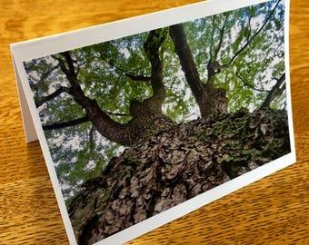 Tree Photo Card