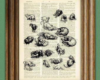 Study of Cats from Leonardo DaVinci sketch on vintage dictionary page book art print Da vinci