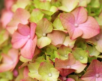 Pink Hydrangea Photo, Hydrangea Photography, Pink Flower Photography, Floral Wall Decor, Pink Flower Nursery Art, Pink Flower photography
